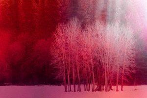 Cherry Trees_Lila Sparks-Daniels